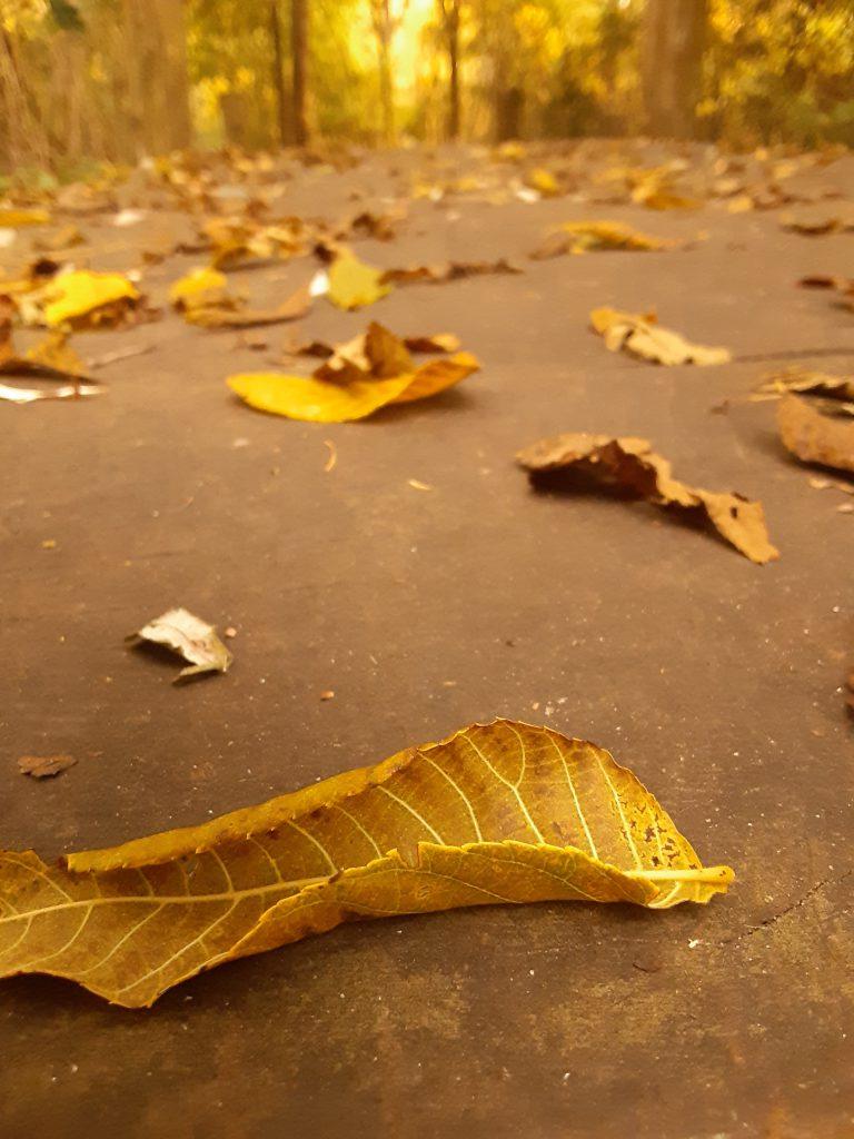 yellow leaf road